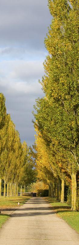 Dsc-0342-poplars-driveway-contact